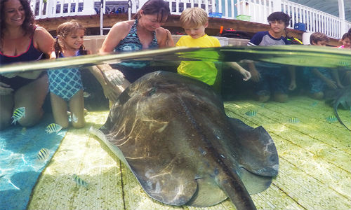 Stingray_Encounter_bahamas